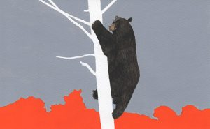 watercolor drawing black bear on a tree