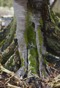 painted photo legs 5 crusty bark