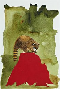 raccoon with red stump